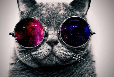 cat-with-cosmos-glasses-animal-hd-wallpaper-1920x1080-1233